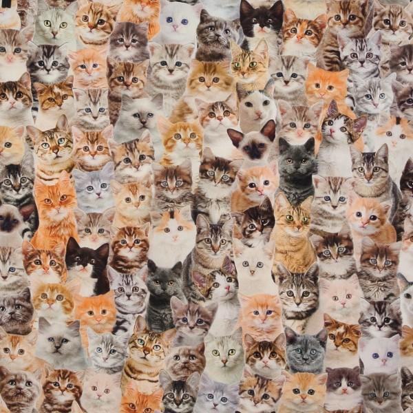 1 m Dekostoff Katzen Kätzchen