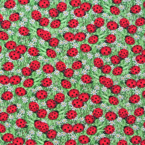 Marienkäfer und Gänseblümchen