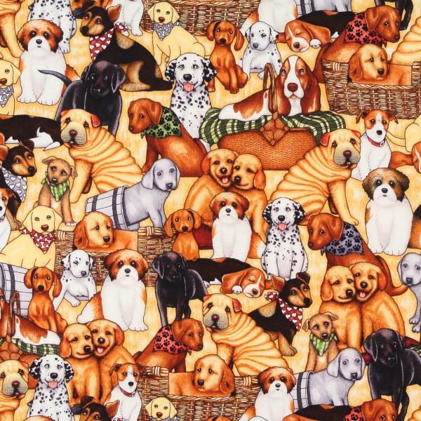 Sale Dan Morris kleine Hundewelpen •