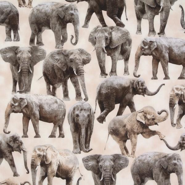 Elefanten wilde Tiere Safari