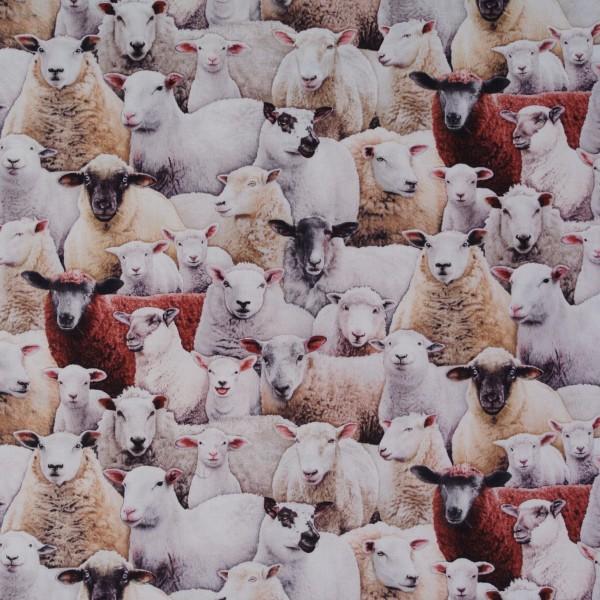 Patchworkstoff Bauernhoftiere Schafe Tiere