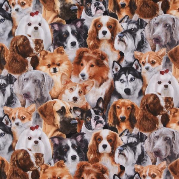 Rassehunde Dog Breeds