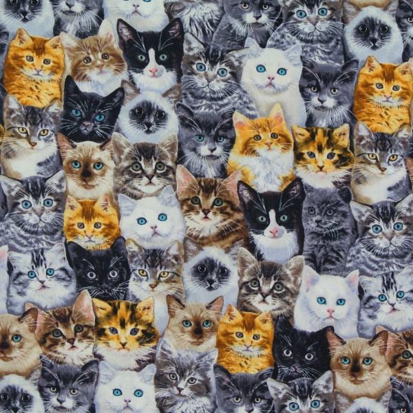 Patchworkstoff Katzen Katzenkinder Breeds of Cats