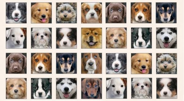 Adorable Pets Hunde Beige