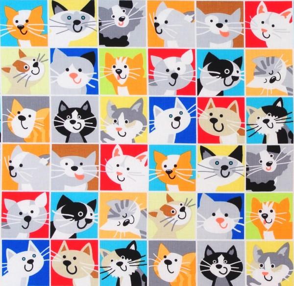 Witzige Katzenbilder Cat Tale
