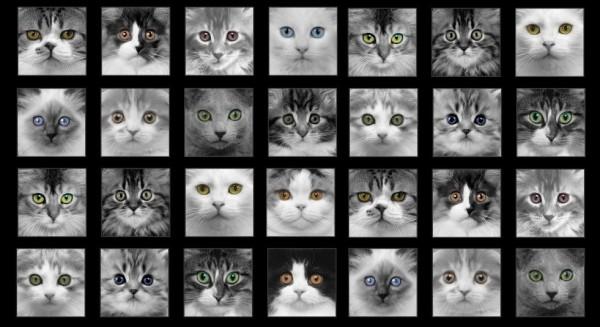 Adorable Pets Katzen Grau Panel 0,6 m