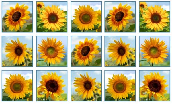 Sonnenblumen Sunflowers Panel