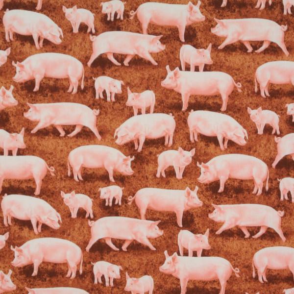 Timeless Schweine und Ferkel
