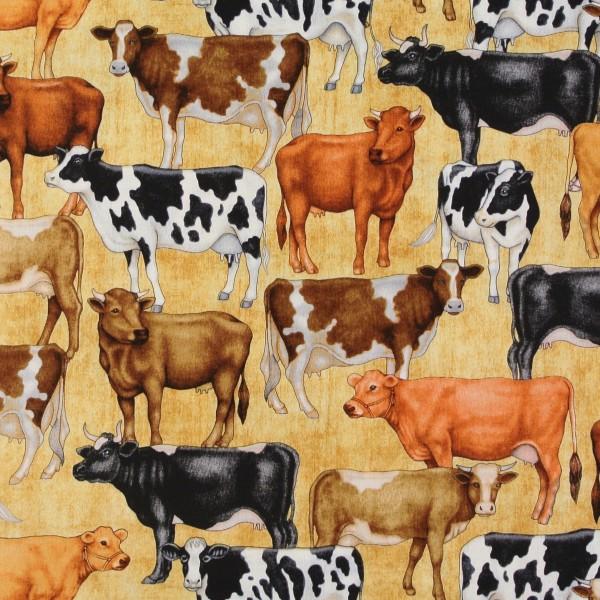 Kühe Milchkühe Tiere Bauernhof