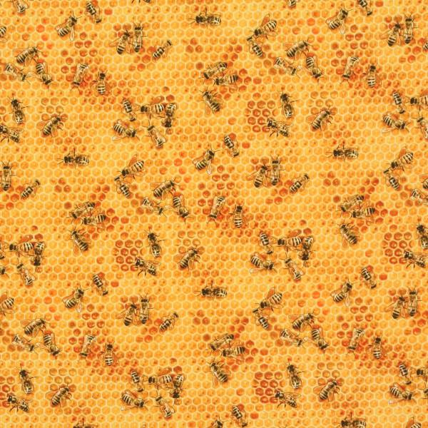 Bienen Honigwaben Imkern