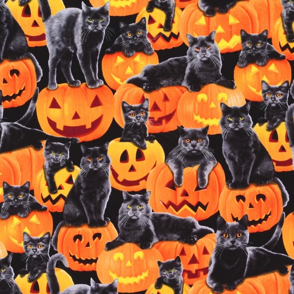 Halloween Katzen und Kürbisse