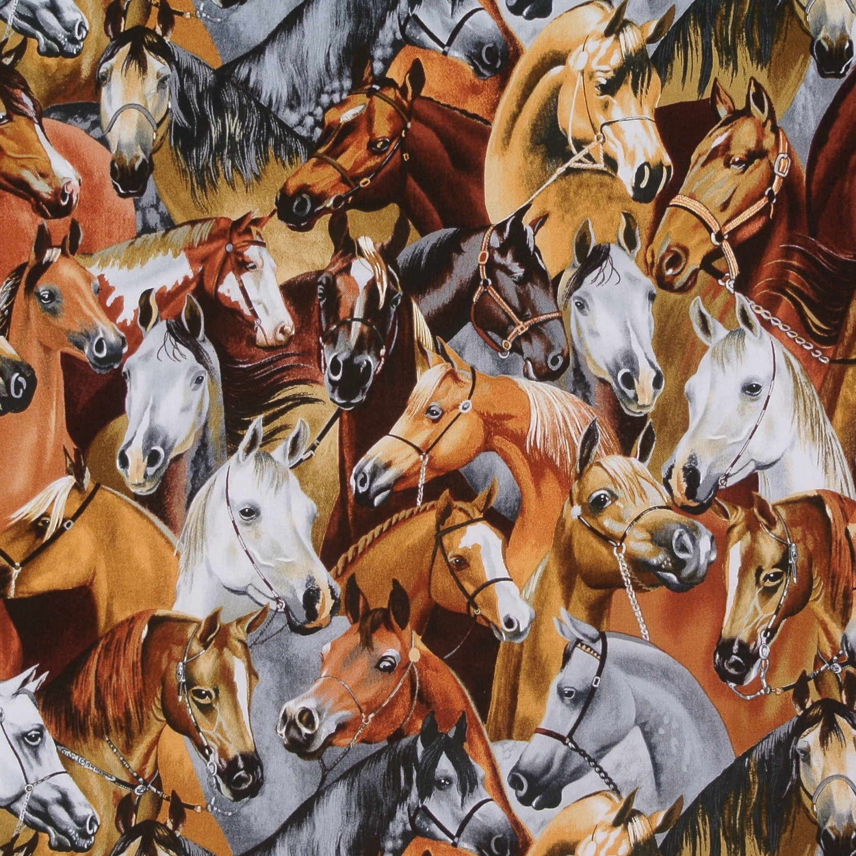 Tiere Pferde