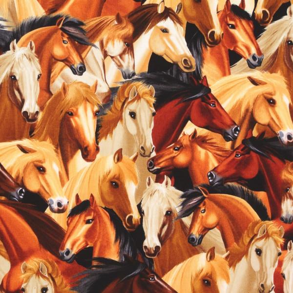 Timeless edle Pferde