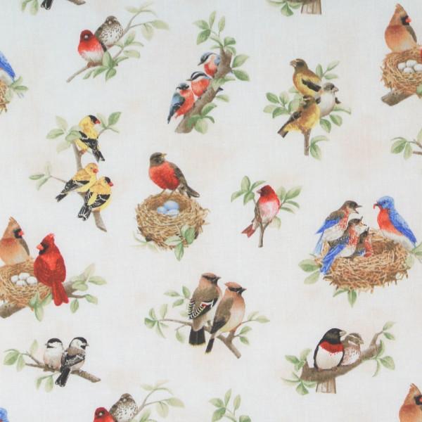 Beautiful Birds kleine Singvögel weiss