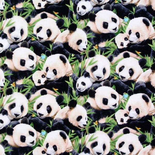 Panda Pandabären Bambus