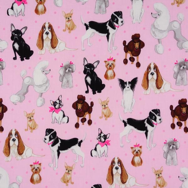 Kaufman kleine Hunde auf Rosa •