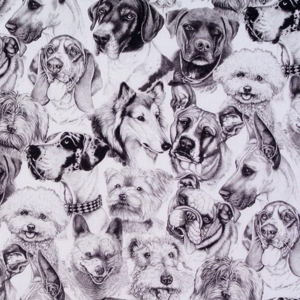 Rassehunde Hunde schwarz-weiss