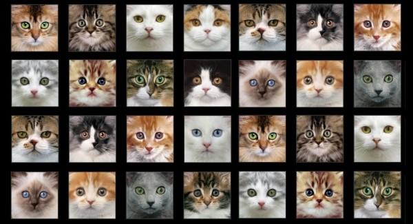Adorable Pets Katzen Beige