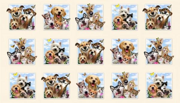 Pet Selfies Tiere Haustiere Hunde Katzen Panel