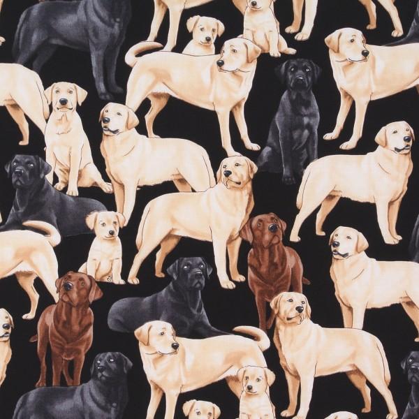 Hunde edle Labradors