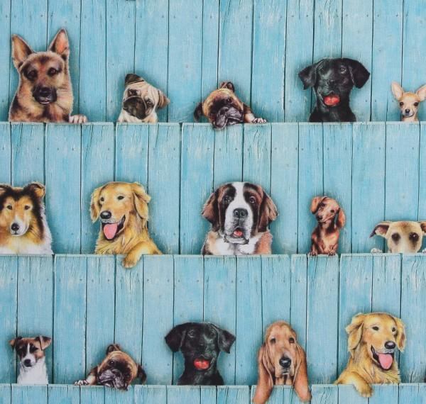 Patchworkstoff Hunde Whiskers Hundestoff Bordüre