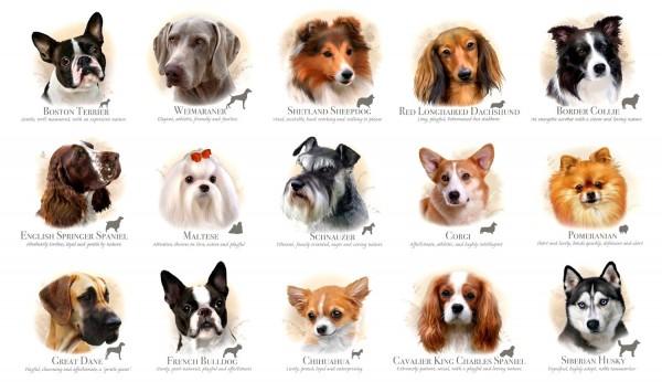 Rassehunde Dog Breeds Panel 60 cm
